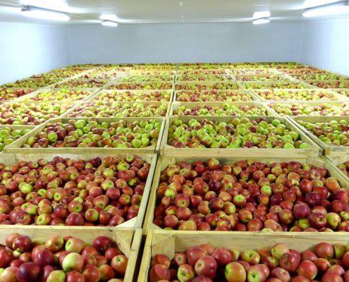 Хранение фруктов в регулируемой атмосфере